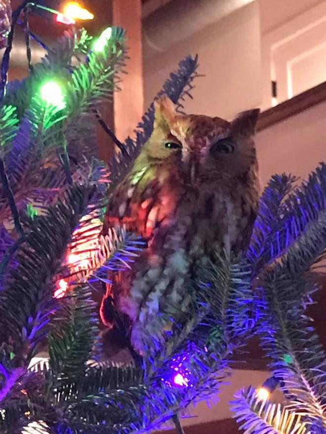 Рождествеская сова