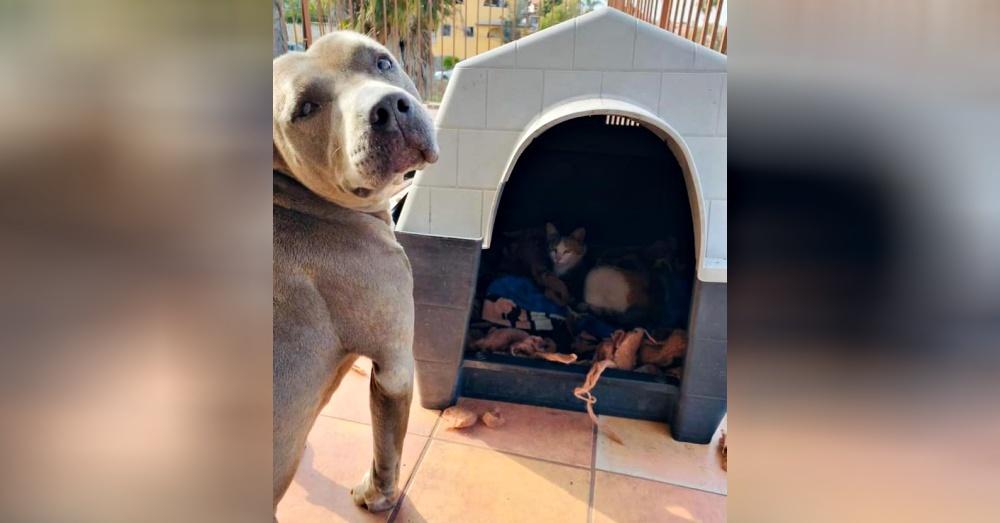 Гадес с гордостью показал хозяину, что он уступил свой дом беременной бродячей кошке.